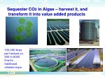 sequester co 2 in algae harvest it and transform it into value added products