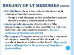 biology of lt memories cont d