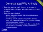 domesticated wild animals