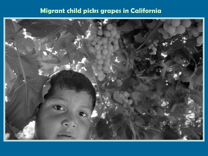 Migrant child picks grapes in California