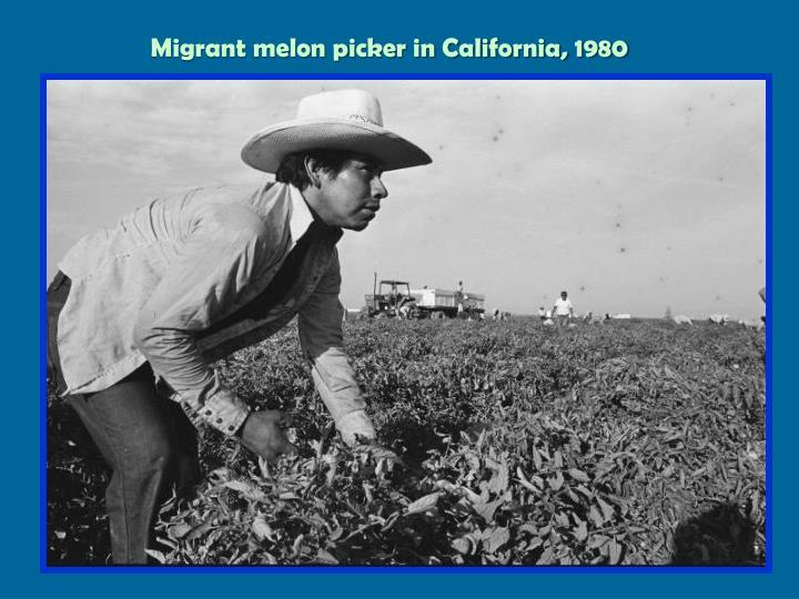 Migrant melon picker in California, 1980