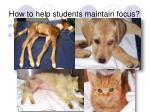 how to help students maintain focus