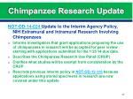 chimpanzee research update