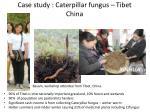 case study caterpillar fungus tibet china