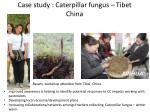 case study caterpillar fungus tibet china1