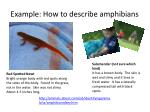 example how to describe amphibians
