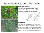 example how to describe shrubs