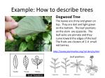 example how to describe trees