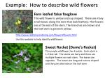 example how to describe wild flowers