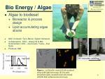 bio energy algae