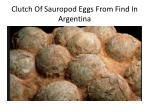 clutch of sauropod eggs from find in argentina