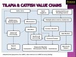 tilapia catfish value chains
