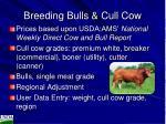 breeding bulls cull cow