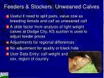 feeders stockers unweaned calves