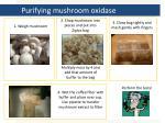 purifying mushroom oxidase