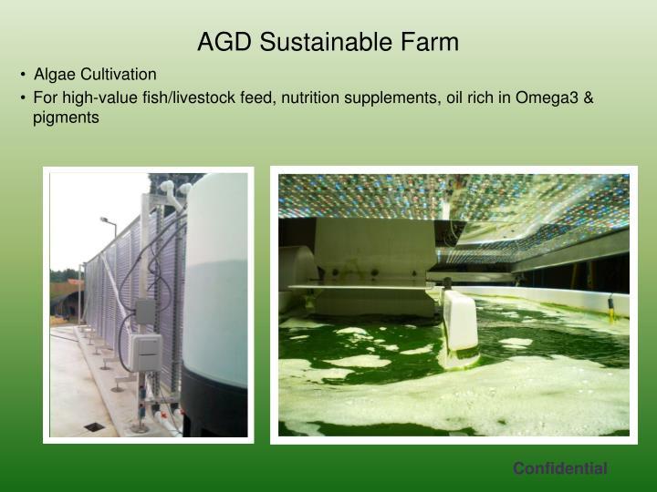 Algae Cultivation