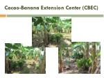 cacao banana extension center cbec