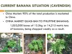 current banana situation cavendish