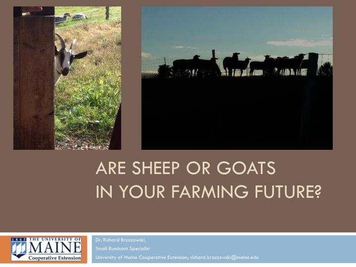 are sheep or goats in your farming future n.