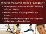 what is the significance of collagen