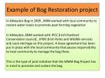 example of bog restoration project