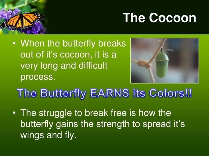 The Cocoon