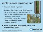 identifying and reporting rust