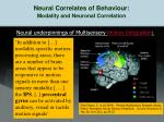 neural correlates of behaviour modality and neuronal correlation