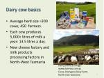 dairy cow basics
