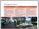 pedigree flock