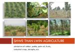shwe than lwin agriculture
