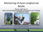 monitoring of asian longhorned beetle