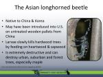 the asian longhorned beetle