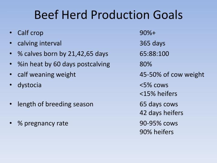 Beef Herd Production Goals