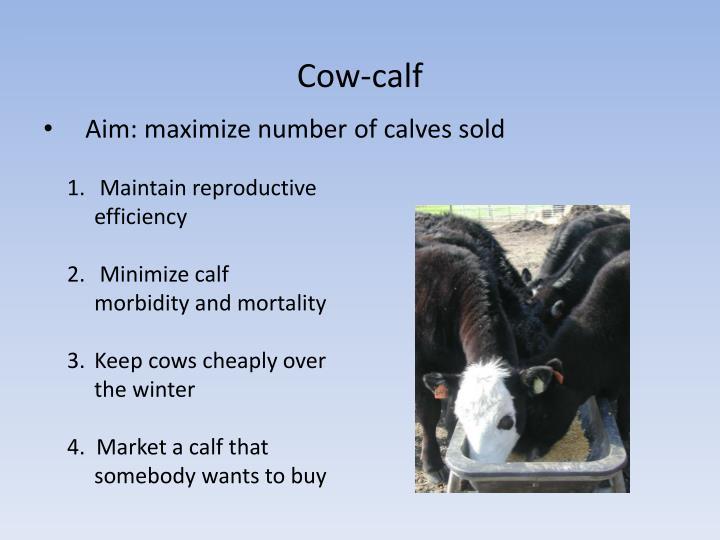 Cow-calf