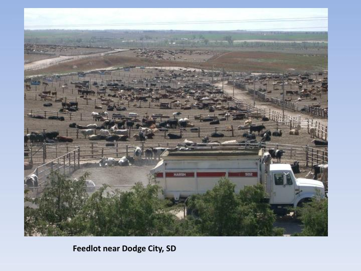 Feedlot near Dodge City, SD
