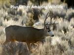 plus other amazing wildlife