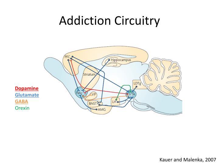 Addiction Circuitry