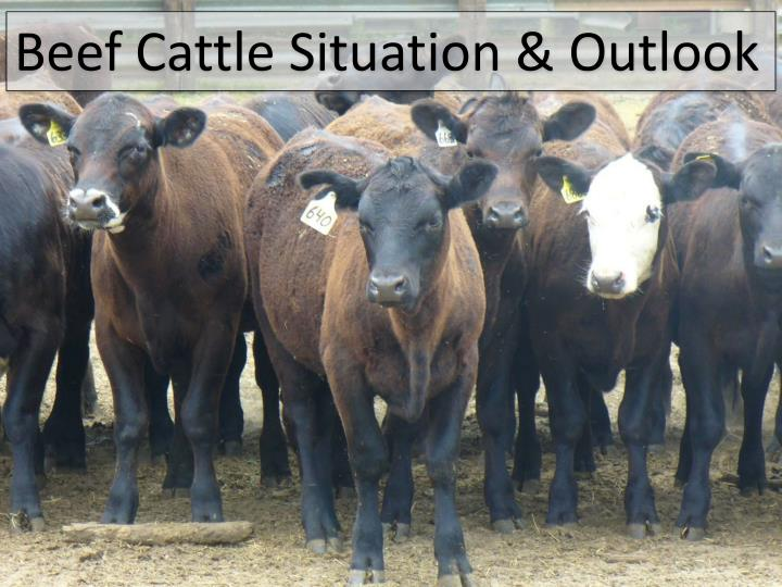 Beef Cattle Situation & Outlook