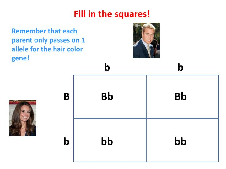 Fill in the squares!