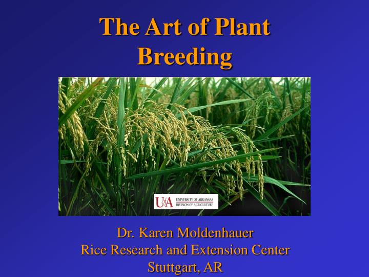 PPT - Dr  Karen Moldenhauer Rice Research and Extension