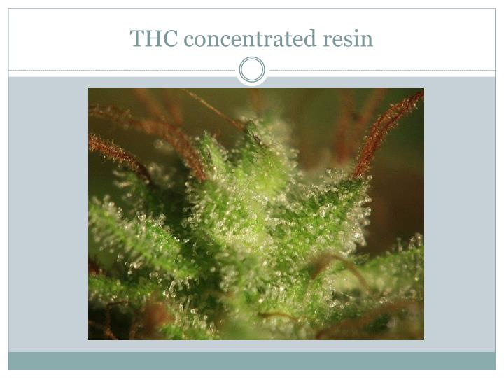 THC concentrated resin