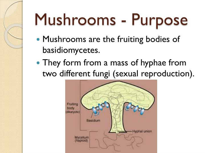 Makalah jamur deuteromycetes asexual reproduction