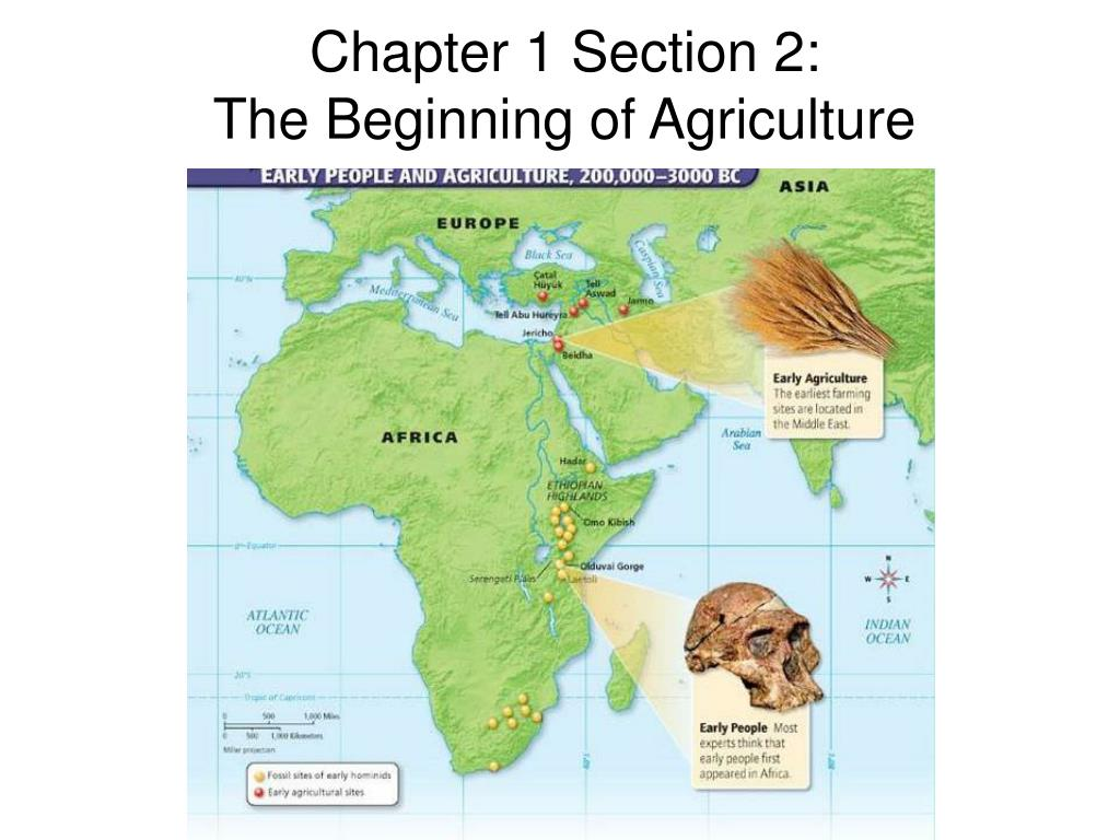 ppt chapter 1 section 2 the beginning of agriculture powerpoint