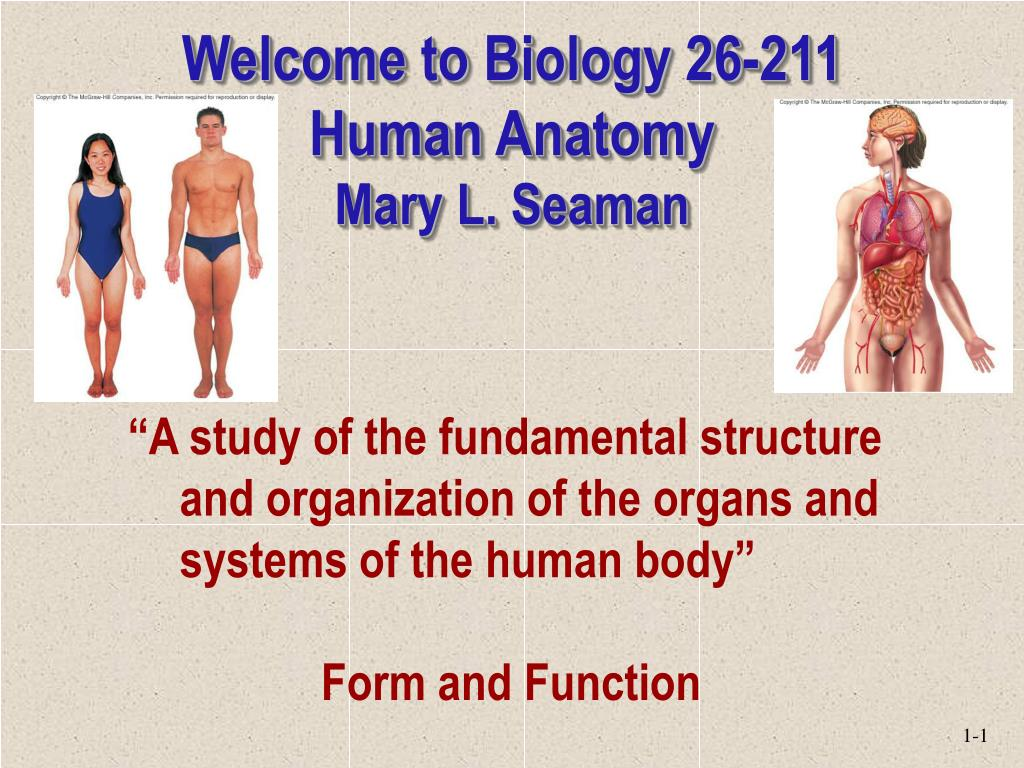 Ppt Welcome To Biology 26 211 Human Anatomy Mary L Seaman