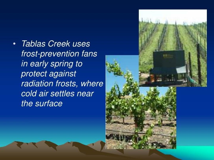 Tablas Creek uses frost-prevention fans in early spring to protect against radiation frosts, where cold air settles near the surface