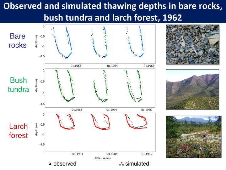 Observed and simulated thawing depths in bare rocks, bush tundra and larch forest, 1962