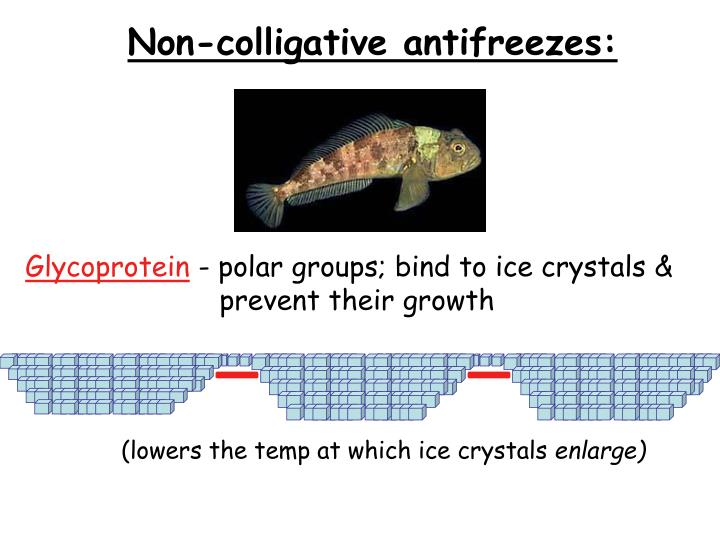 Non-colligative antifreezes:
