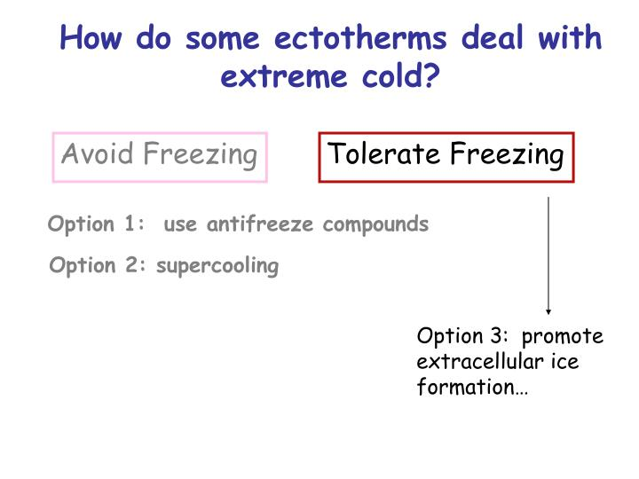 Option 3:  promote extracellular ice formation…