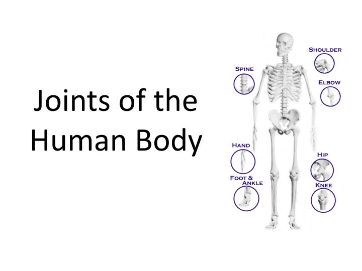 PPT - Joints of the Human Body PowerPoint Presentation - ID:1701928